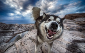 Picture face, background, dog
