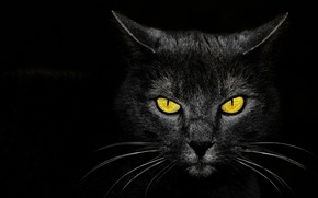 Picture eyes, background, Monster Kill, black cat