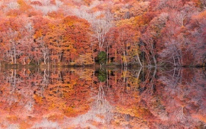 Picture autumn, trees, reflection, foliage, photographer, Kenji Yamamura, Lake Tsuta