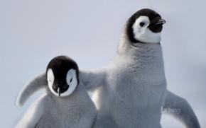 Picture bird, friendship, penguin, Antarctica