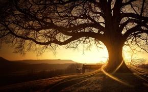 Wallpaper sunrise, the sun, tree