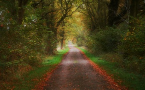 Picture autumn, leaves, trees, nature, colors, track, Nature, falling leaves, trees, autumn, leaves, path