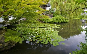 Picture branches, nature, pond, photo, garden, water lilies