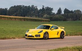 Picture Porsche, Cayman, Yellow, Field, GT4