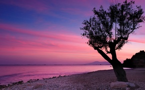 Picture the sky, clouds, sunset, mountains, lake, stones, tree, shore