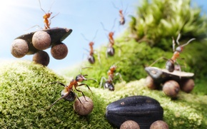 Picture summer, macro, insects, moss, the situation, ants, seeds, riding, entertainment, Wallpaper from lolita777, truck