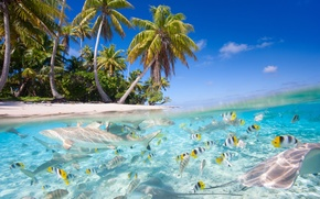 Picture sea, beach, fish, nature, tropics, palm trees, sharks
