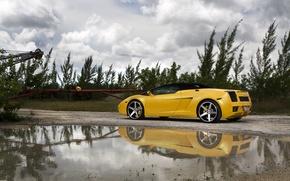 Picture grass, trees, yellow, puddle, gallardo, convertible, lamborghini, drives, rear view, yellow, Lamborghini, Gallardo, lp560-4 spyder