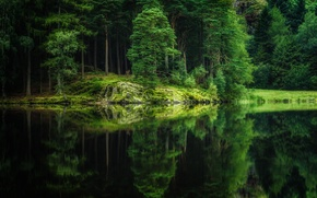 Picture forest, trees, nature, lake, reflection