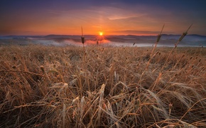 Wallpaper nature, field, landscape, sunset
