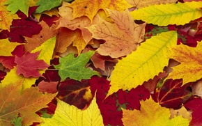 Picture autumn, leaves, nature, seasons, yellow, red, colorful, fallen
