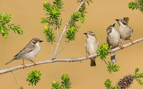 Picture branch, feathers, birds, Quartet