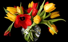 Picture flowers, spring, yellow, tulips, red, vase, black background, buds