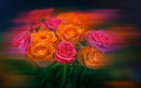 Picture flowers, roses, treatment, bouquet, blur