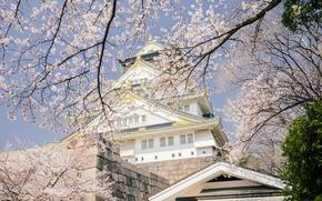 Picture trees, branches, cherry, castle, spring, Japan, Sakura, Japan, flowering, Osaka, Osaka, Osaka Castle, Osaka Castle …