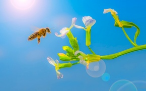 Picture flower, the sun, bee
