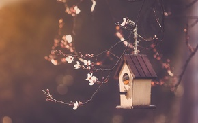 Picture branches, nature, Bird house