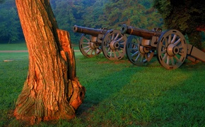 Picture forest, grass, tree, wheel, gun, the edge, carriage