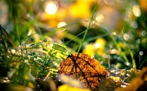 Picture autumn, grass, nature, leaf