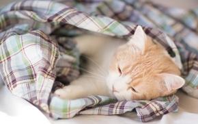 Picture kitty, Hannah, © Benjamin Torode