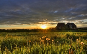 Picture field, summer, sunset, house