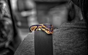 Picture color, snake, shoulder