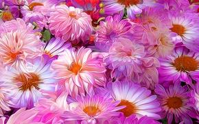 Picture flowers, petals, garden, flowerbed