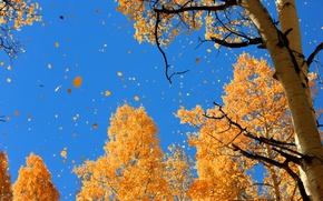 Picture autumn, the sky, nature, foliage