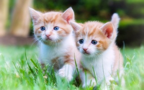 Picture kittens, walk, kids, a couple, twins