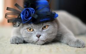 Picture cat, cat, rose, hat