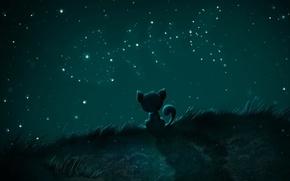 Picture stars, fish, Night, Koshak