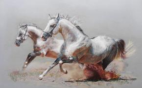 Picture figure, horses, dust, horse, running, pair