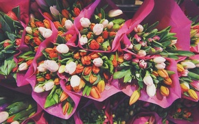 Picture flowers, tulips, bouquets