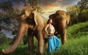 Wallpaper Asian, girl, elephants