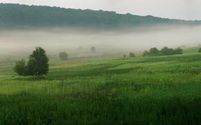 Wallpaper fog, trees, grass, 156, green