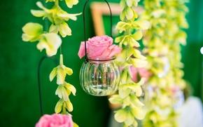 Picture rose, Bud, jar