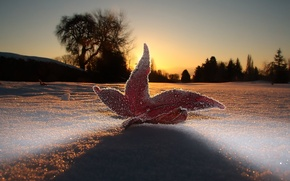 Picture the sky, macro, light, snow, sheet, the evening, frost