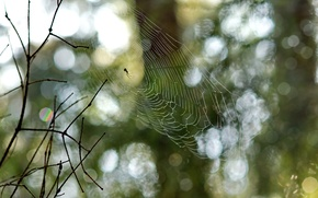 Picture branches, Nature, web, spider, bokeh