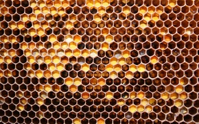 Picture honey, pattern, Honeycomb, bees