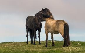 Wallpaper rainy, field, the sky, grass, love, horse