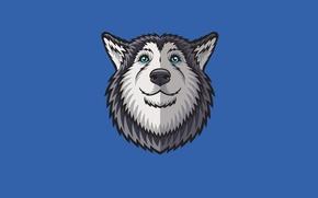 Picture face, dog, minimalism, husky, husky