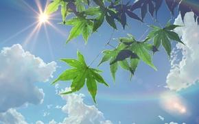 Wallpaper The sun, The sky, Clouds, Anime, Foliage, Makoto Xingkai, Anime, The Garden Of Words, Makoto ...