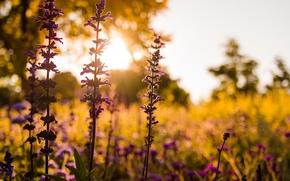 Picture Flower, Sunset, Evening, Meadow, Closeup