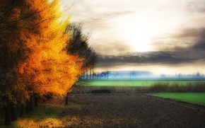 Picture field, autumn, nature