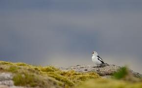 Picture bird, rock, singing, wildlife
