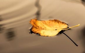 Picture autumn, water, macro, yellow, nature, sheet, shadow