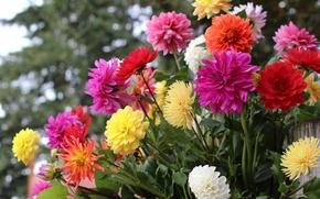 Picture autumn, colorful, dahlias