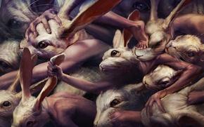 Wallpaper fight, rabbits, mutants, ryohei hase