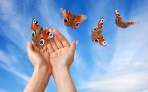 Wallpaper hands, the sky, butterfly