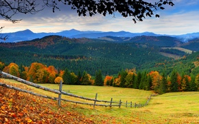 Picture road, autumn, forest, the sky, grass, leaves, trees, mountains, nature, colors, colorful, grass, forest, road, …